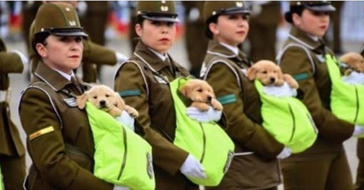 La parata militare più tenera mai vista – Le poliziotte sfilano senza armi ma con piccoli cuccioli di cane