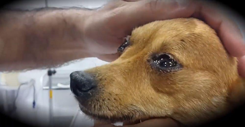 Un veterinario rivela cosa provano i cani prima di morire e fa piangere migliaia di proprietari – Il Video
