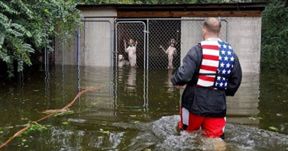 Salvano sei cani rimasti intrappolati nelle gabbie durante l'uragano