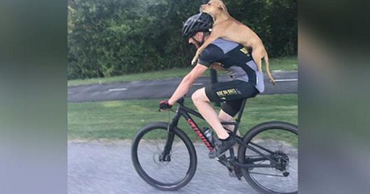 Era in bici quando vede il cane ferito, quello che ha fatto per salvarlo ha sorpreso tutti