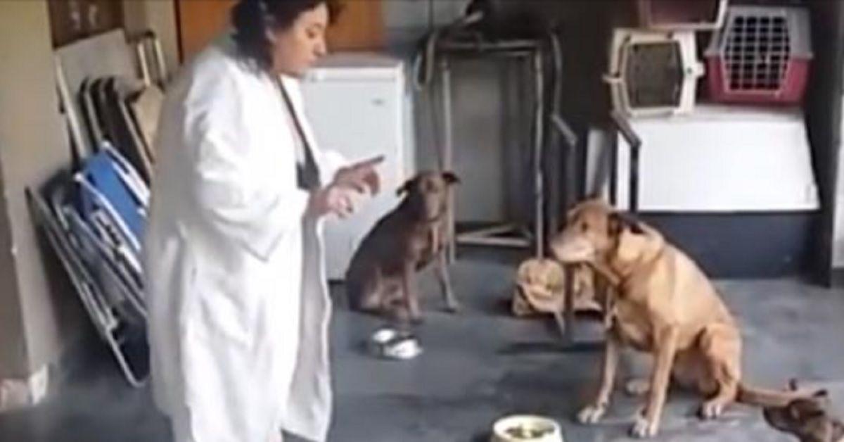 Distribuisce il cibo ma quello che fanno i cani prima di mangiare è straordinario