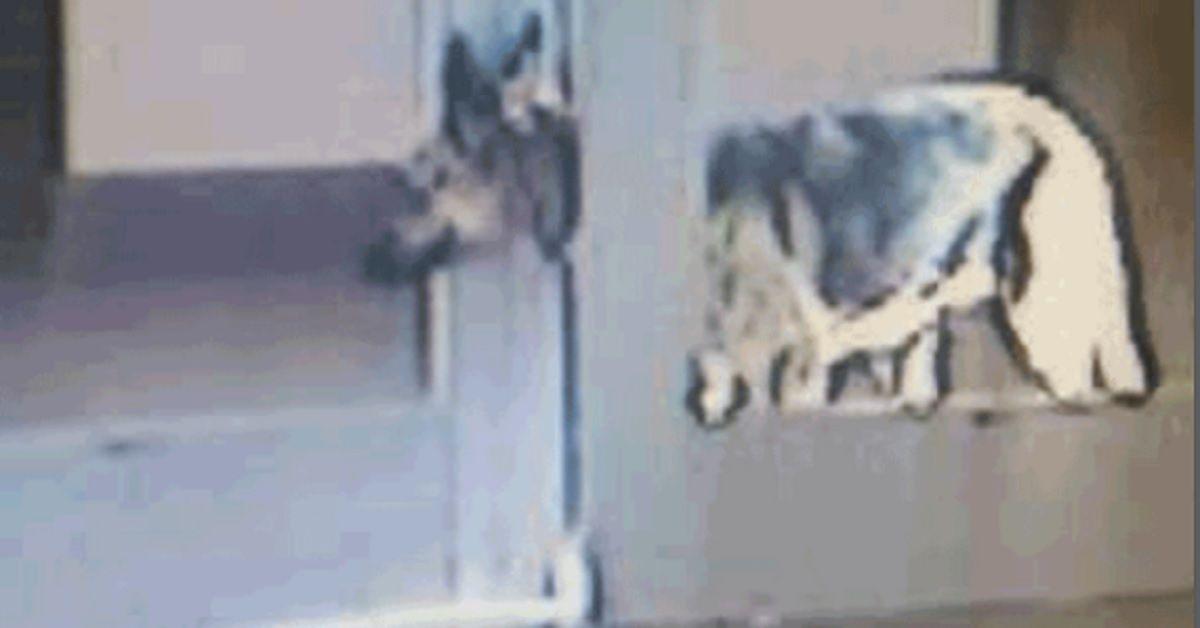 Questa cagnolina è diventata famosa in tutto il mondo, dopo il suo tentativo di fuga