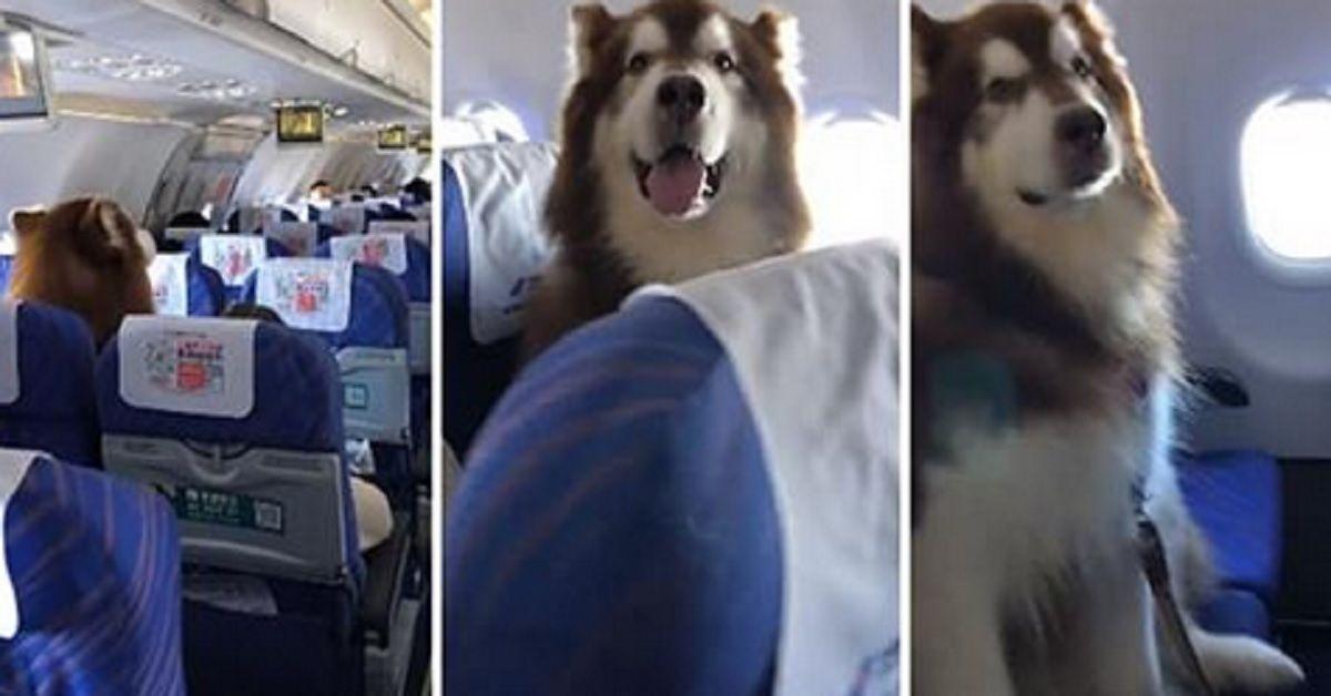 Gli hanno permesso di volare su un sedile accanto al suo proprietario disabile. Si è comportato meglio di molti bambini