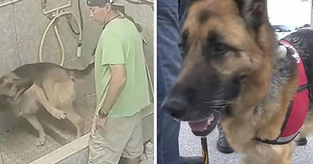 Impiegato arrestato per aver fatto male ad un cane che non aveva ubbidito all'ordine di fermarsi