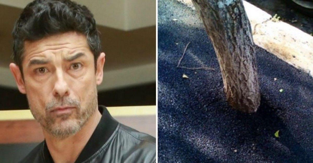 Gassman pubblica su Twitter la foto degli alberi asfaltati a Roma e la Raggi risponde alla segnalazione dell'attore
