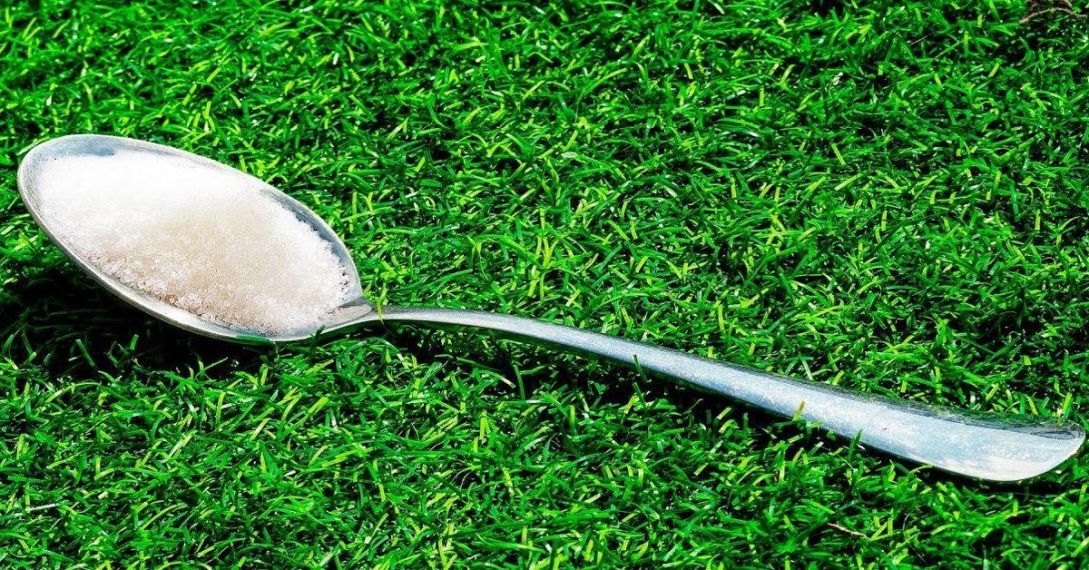 Esiste una buona ragione per mettere un cucchiaio di zucchero nel giardino di casa. Ecco qual è.
