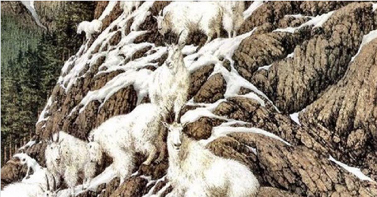 Quante capre ci sono in questa foto? L'immagine che ha confuso il Web