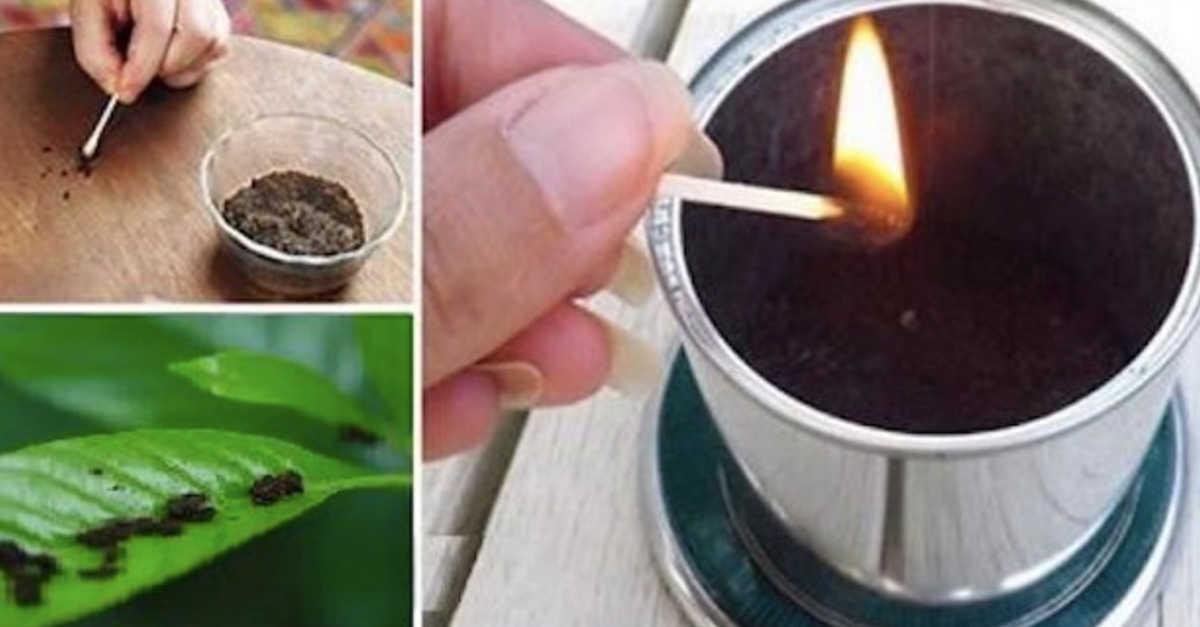 Come combattere le zanzare: ecco il trucco del caffè che in pochissimi conoscono!