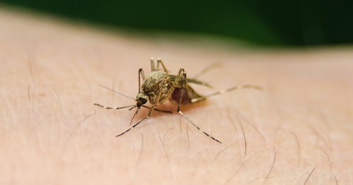 Perché le zanzare pungono alcune persone più di altre? Ecco la risposta in un video!