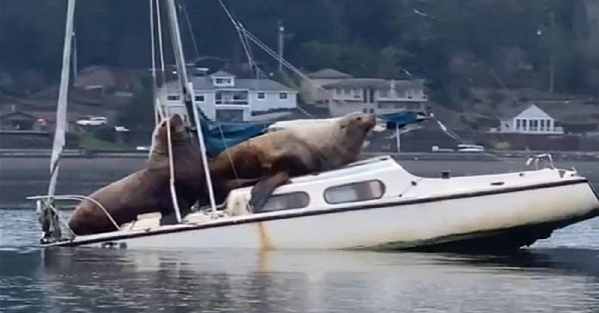 """Due leoni marini  """"rubano"""" una barca e fanno un giro,  la scena inaspettata dal finale ancora più insolito, ripresa da un calciatore"""