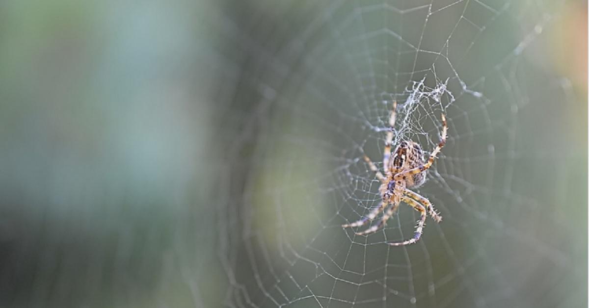 I rimedi della nonna per combattere i ragni in casa.