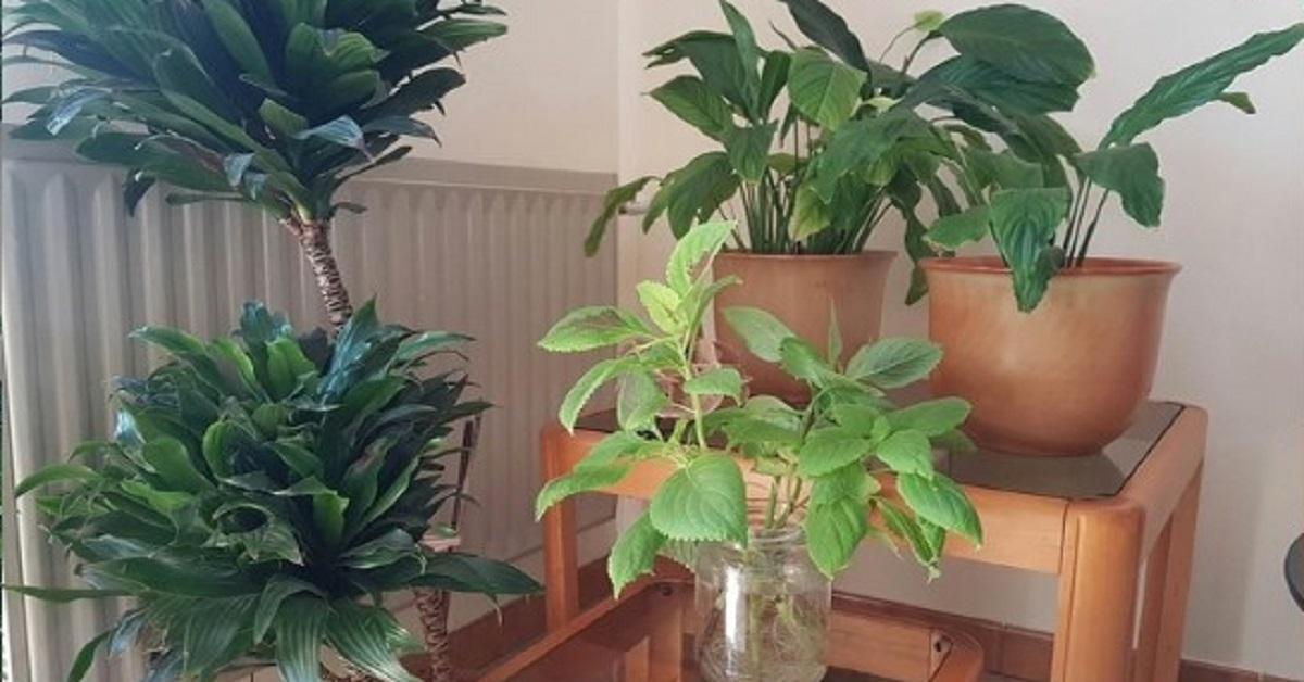 5 Trucchi naturali per avere sempre un buon profumo in casa