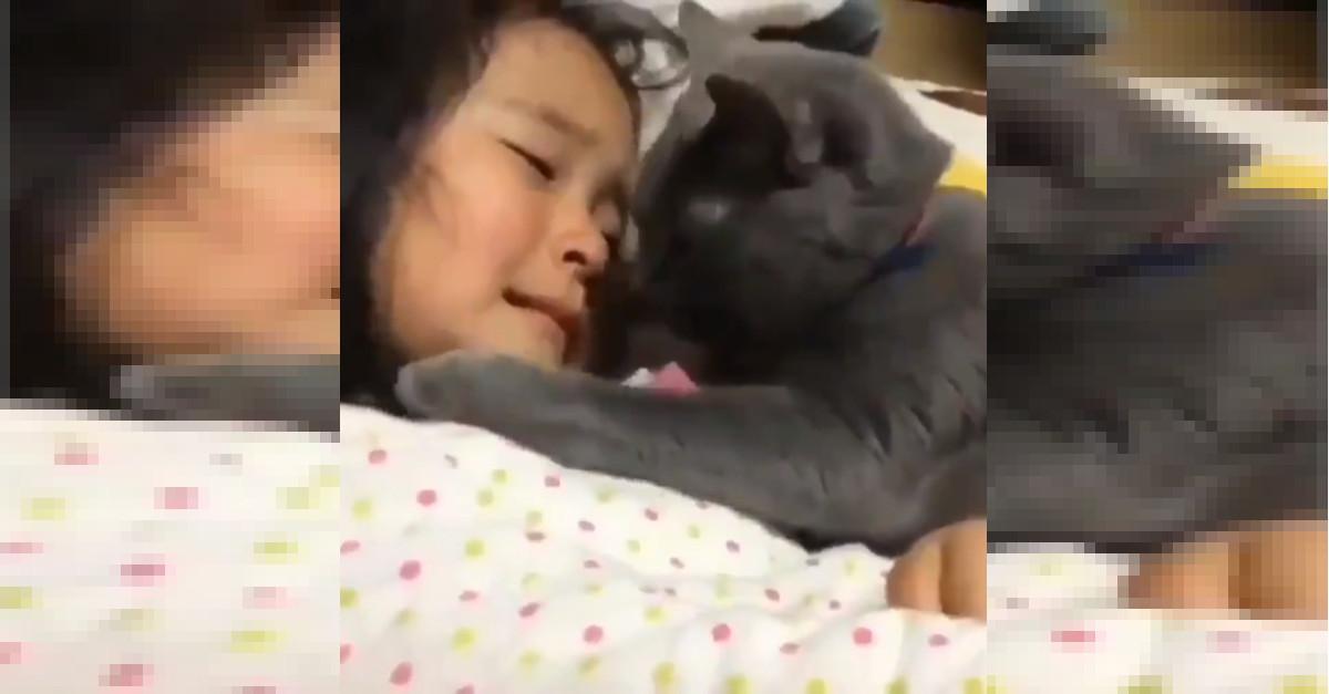 Gattino affettuoso consola dal pianto una ragazzina [VIDEO]