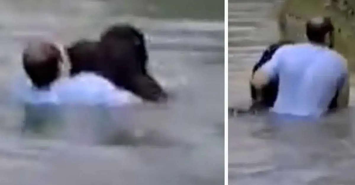 I lavoratori dello zoo si rifiutano di salvare la scimmia che sta annegando. Un visitatore salta in acqua per salvarlo