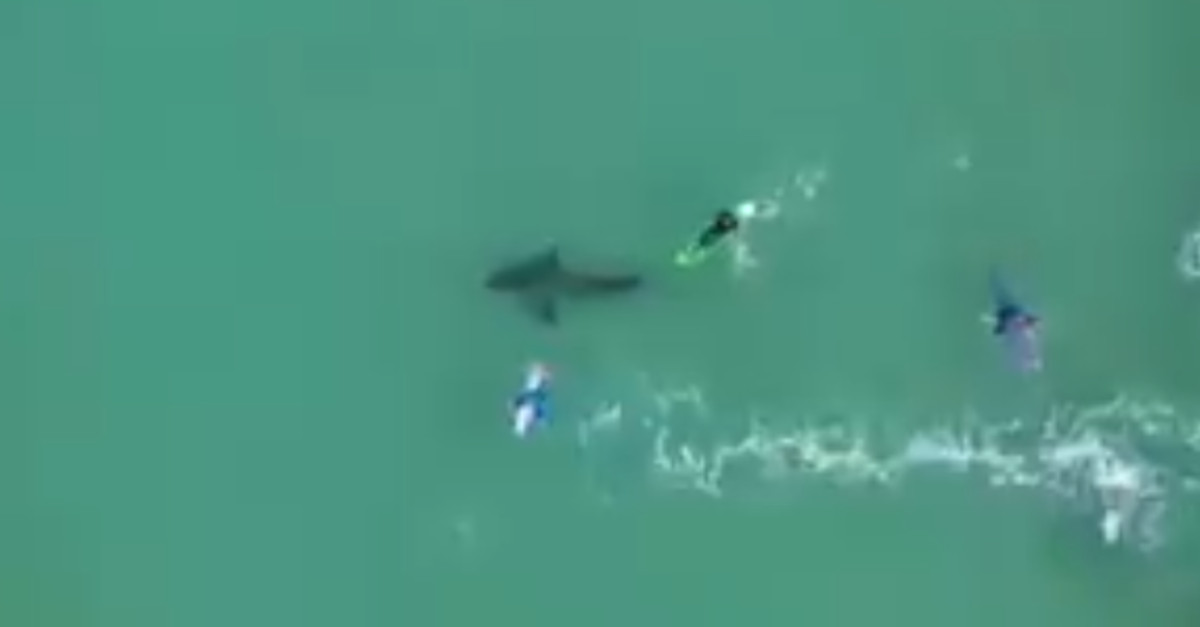 Surfando si sono presi un colpo a vedere un gigantesco squalo bianco proprio sotto di loro [VIDEO]