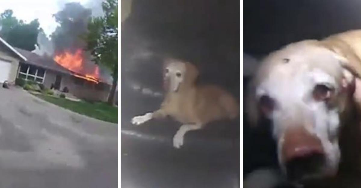Telecamera della polizia registra il salvataggio di un cane all'interno di una casa in fiamme – VIDEO