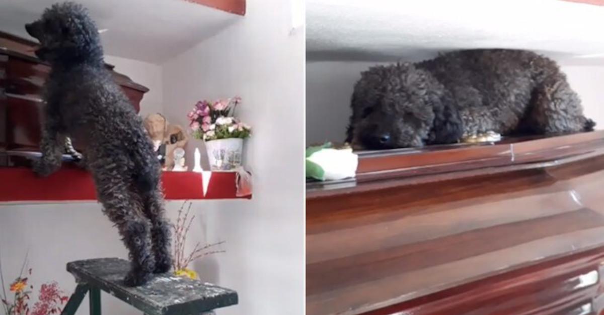 Il cagnolino continua a visitare la tomba del suo proprietario scomparso 4 anni fa [VIDEO]