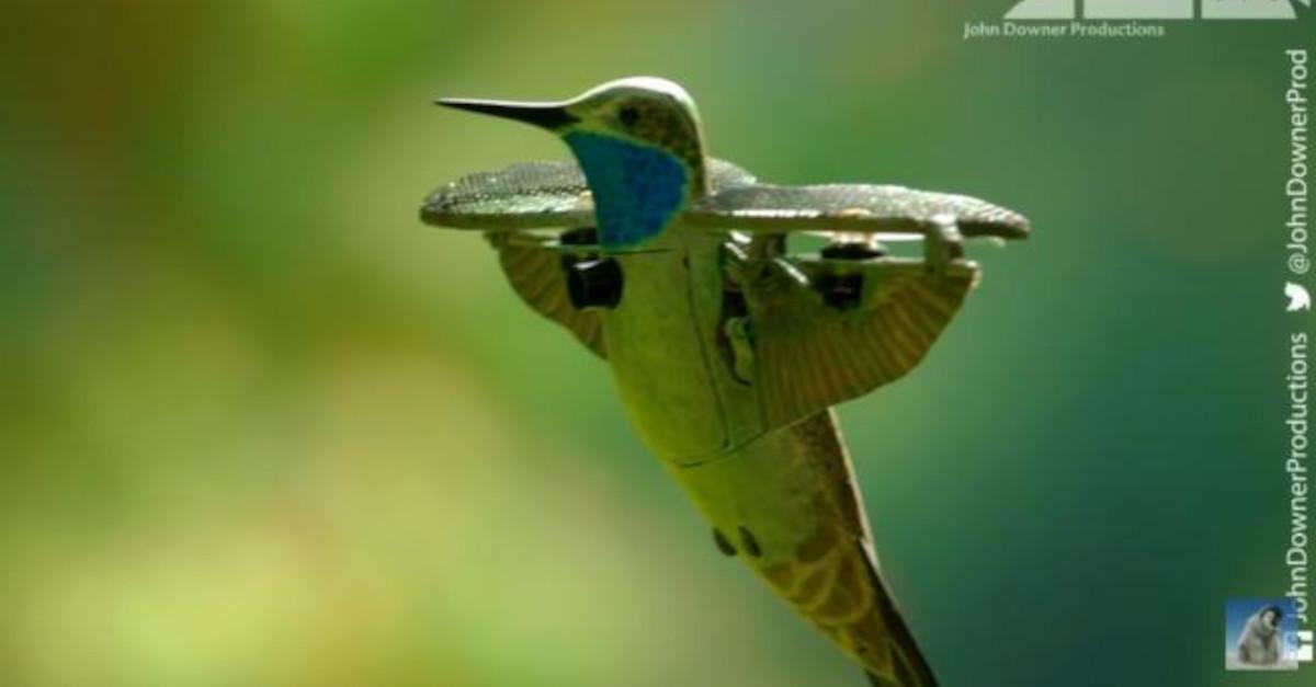 Il robot colibrì registra il momento in cui migliaia di farfalle monarca prendono il volo [VIDEO]