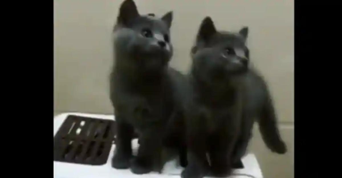 I gattini muovono la testa in perfetta sincronia, il video è adorabile
