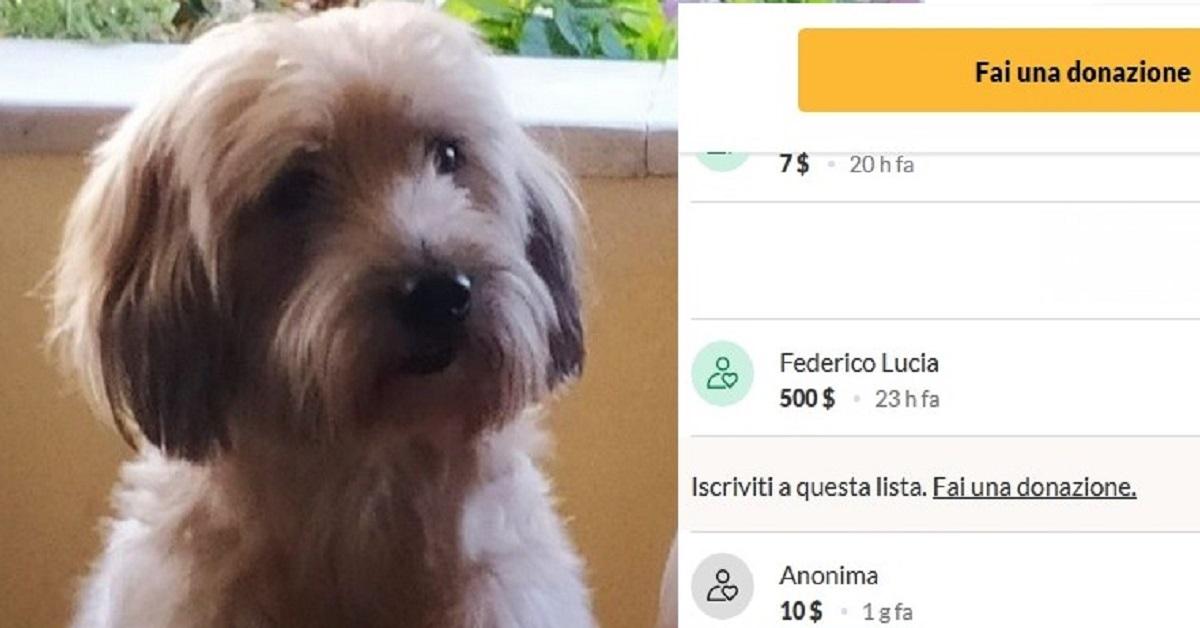 Una fan di Fedez chiede aiuto sul web per il suo cane, il cantante fa una donazione   e su Twitter il gesto non passa inosservato.
