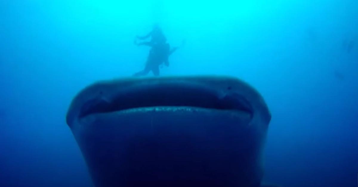 Sub nuota a pochi metri da uno squalo balena [VIDEO]