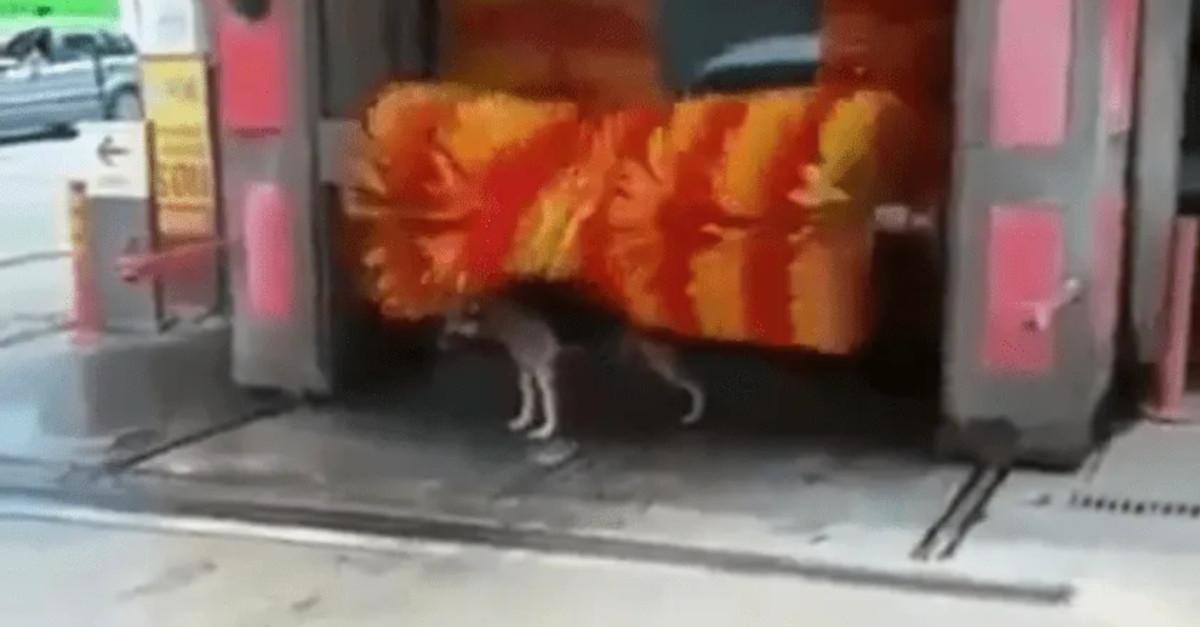 Esilarante! Il cucciolo fa il bagno in un autolavaggio [VIDEO]