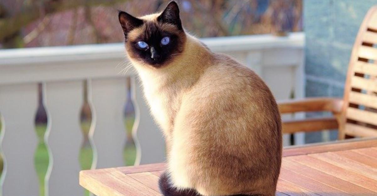 10 alimenti che  i gatti NON possono mangiare