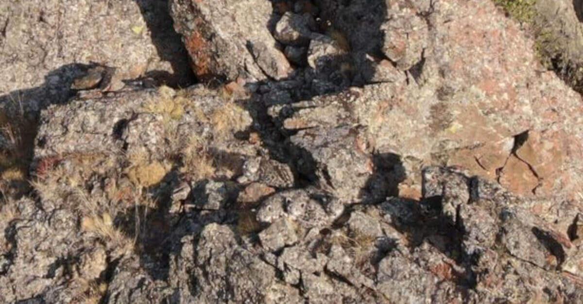 Test di acutezza visiva: solo i più perspicaci possono trovare i cuccioli di leopardo mimetizzati. E tu?