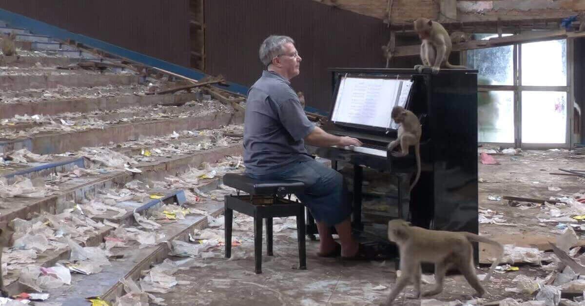 Il pianista Paul Barton calma le scimmie affamate con la sua musica [VIDEO]