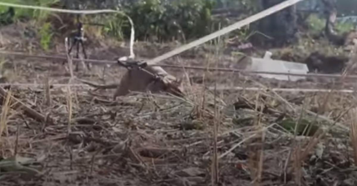 Il topo gigante che è stato premiato con una medaglia d'oro dallo stato (VIDEO)