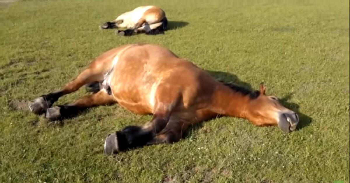 Un video diventa virale quando il padrone scopre che i suoi cavalli mentono e decide di riprenderli