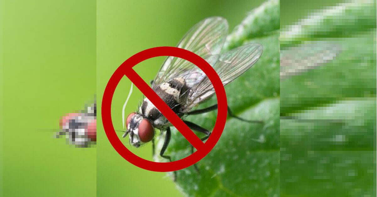 5 suggerimenti utili per eliminare in modo definitivo le mosche all'interno della nostra casa.