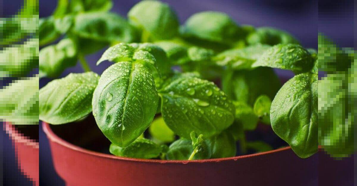 Le migliori piante per iniziare a coltivare un orto in casa. Ecco 8 consigli!