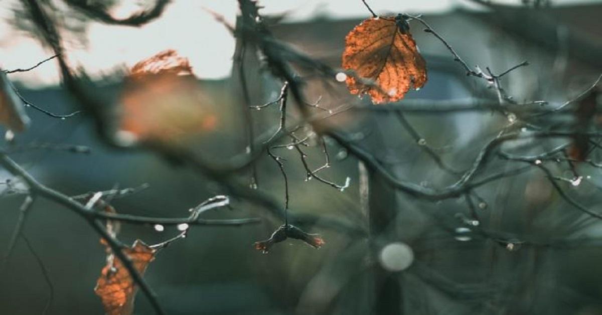 Fine novembre |  ecco quali sono i segni zodiacali più oscuri  Non sarà un piacere incontrarli
