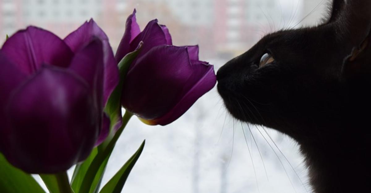 6 piante tossiche per gatti che non dovresti avere a casa