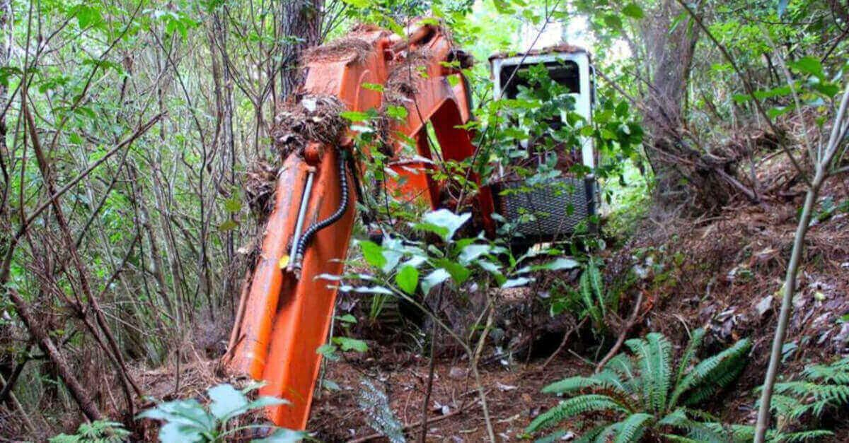 L'uomo trova un escavatore abbandonato nella foresta e riceve una grossa sorpresa quando si avvicina [VIDEO]
