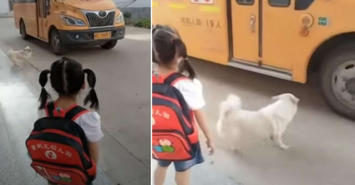 Cane accompagna ogni mattina la padroncina a prendere il Bus per la scuola