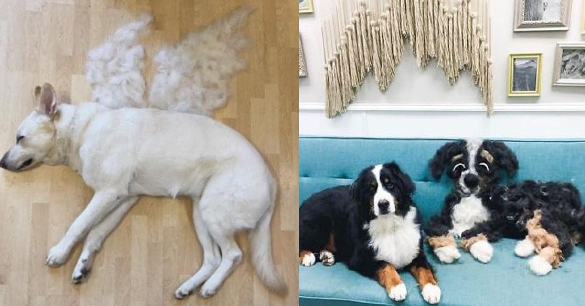 14 creativi padroni di cani trasformano i peli dei loro amici a quattro zampe in opere d'arte