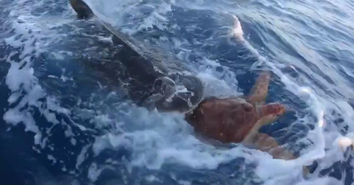 """Alcuni pescatori salvano una tartaruga dall'essere mangiata da uno squalo: """"Oh mio Dio!"""""""