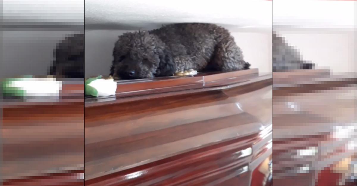 Un cane visita la tomba del proprietario, morto 4 anni fa. Il momento è a dir poco commovente