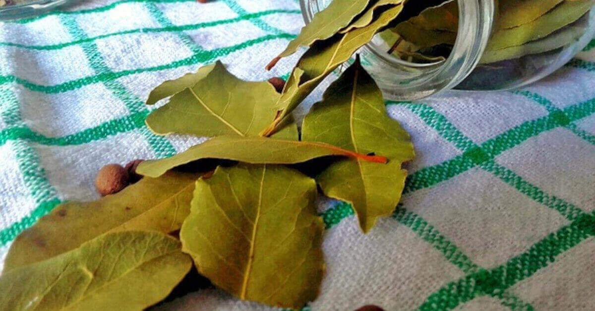 Brucia le foglie di alloro in casa e guarda cosa succede!