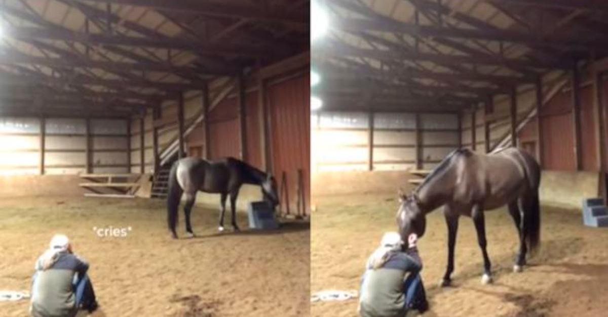L'emotiva reazione del cavallo che vede piangere la sua padroncina