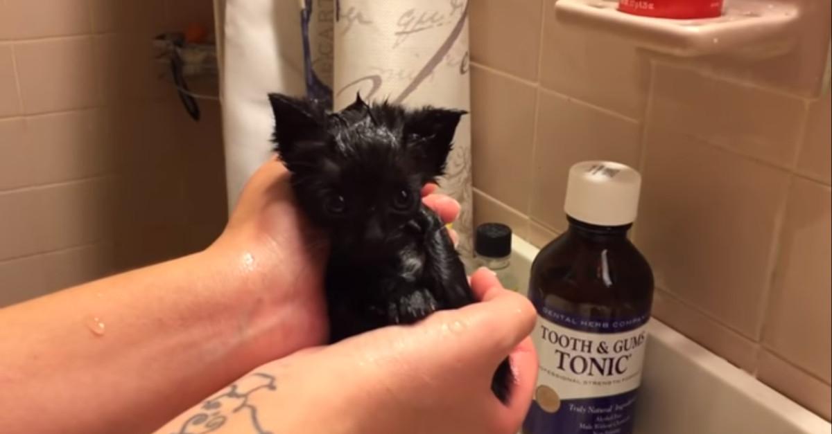 Un gatto che viene lavato dai suoi proprietari divide gli utenti di YouTube