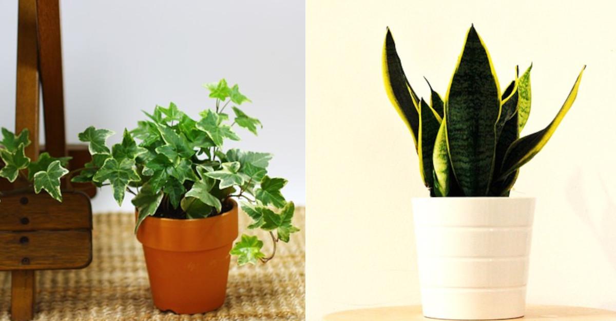 5 piante che aiutano a purificare l'aria della tua casa