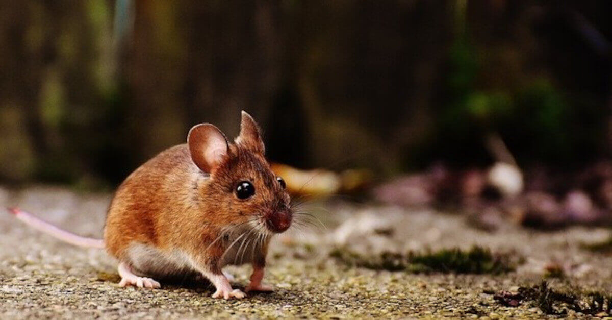 Il salto di un topo provoca un gran trambusto in un autobus e i social ridono di gusto!