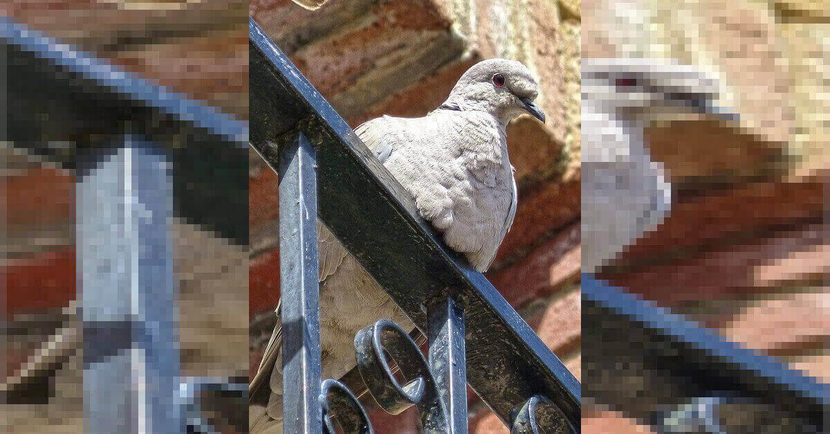 Uccelli sul balcone: come impedire a uccellini e piccioni di nidificare nelle finestre?