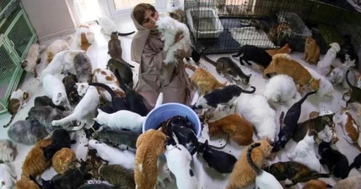 Donna recupera circa 500 gatti e trasforma la sua casa in un rifugio