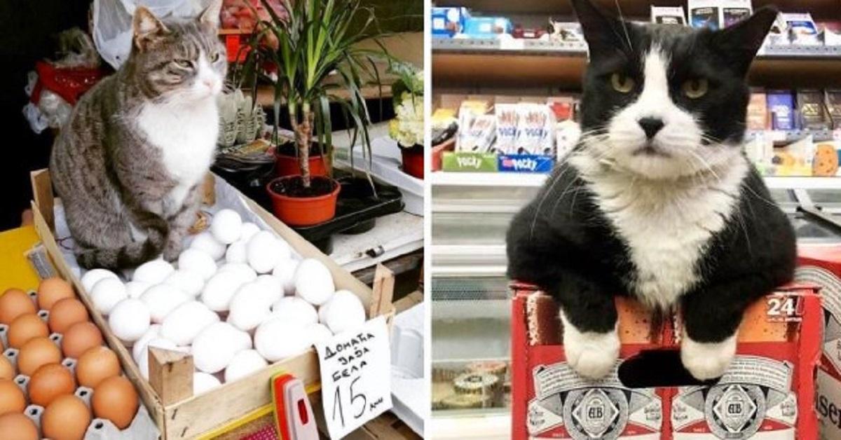 17 persone postano le foto dei gatti trovati in negozio. Sembrano essere loro i veri proprietari