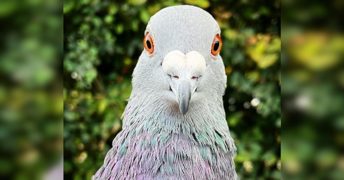 9 motivi per cui i piccioni sono tra gli animali più odiati