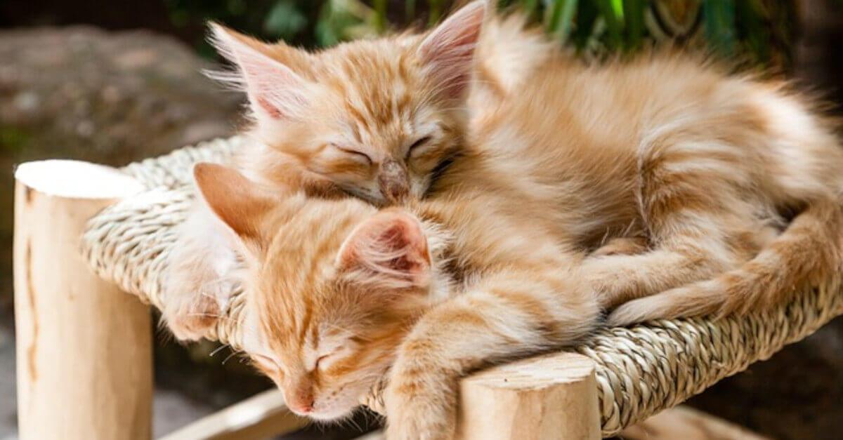 Come eliminare i cattivi odori degli animali da casa